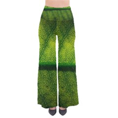 Leaf Nature Green The Leaves Pants