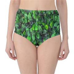 The Leaves Plants Hwalyeob Nature High Waist Bikini Bottoms