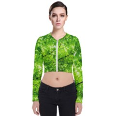 Green Wood The Leaves Twig Leaf Texture Bomber Jacket