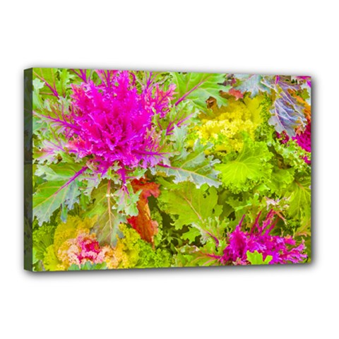 Colored Plants Photo Canvas 18  X 12