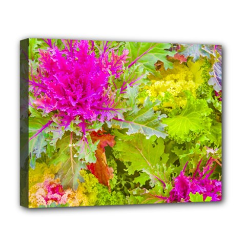 Colored Plants Photo Deluxe Canvas 20  X 16