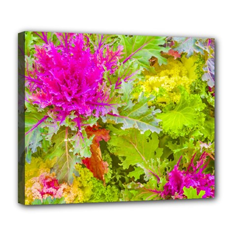 Colored Plants Photo Deluxe Canvas 24  X 20