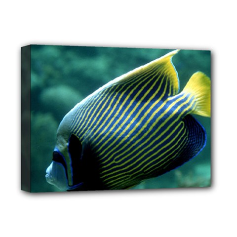 Angelfish 4 Deluxe Canvas 16  X 12