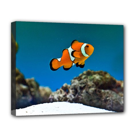 Clownfish 1 Deluxe Canvas 20  X 16