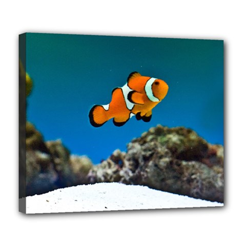Clownfish 1 Deluxe Canvas 24  X 20