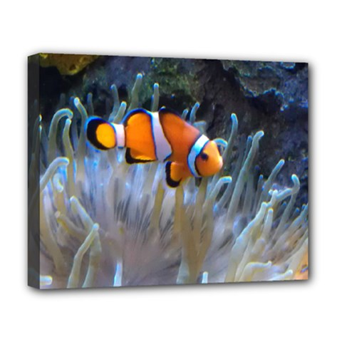 Clownfish 2 Deluxe Canvas 20  X 16