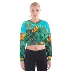Clownfish 3 Cropped Sweatshirt