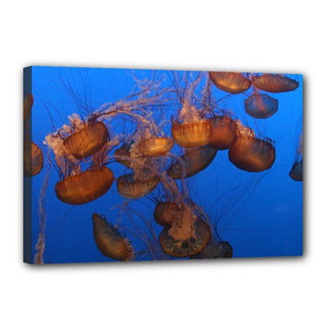 Jellyfish Aquarium Canvas 18  X 12