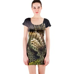 Lionfish 3 Short Sleeve Bodycon Dress
