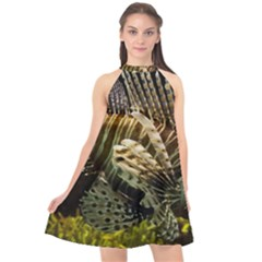 Lionfish 3 Halter Neckline Chiffon Dress