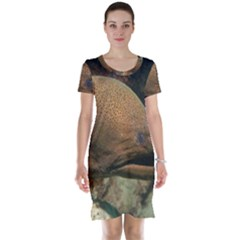 Moray Eel 1 Short Sleeve Nightdress