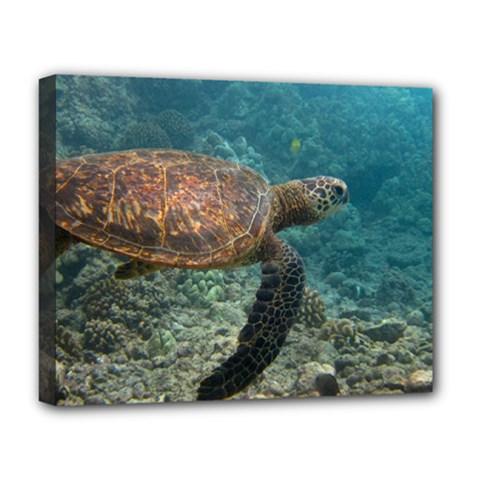 Sea Turtle 3 Deluxe Canvas 20  X 16