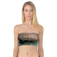 Sea Turtle 3 Bandeau Top