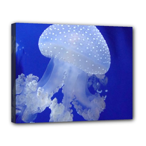 Spotted Jellyfish Canvas 14  X 11