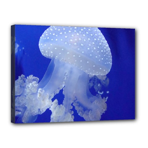 Spotted Jellyfish Canvas 16  X 12