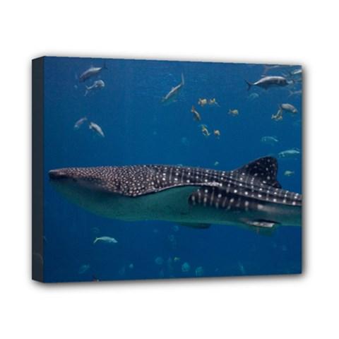 Whale Shark 1 Canvas 10  X 8