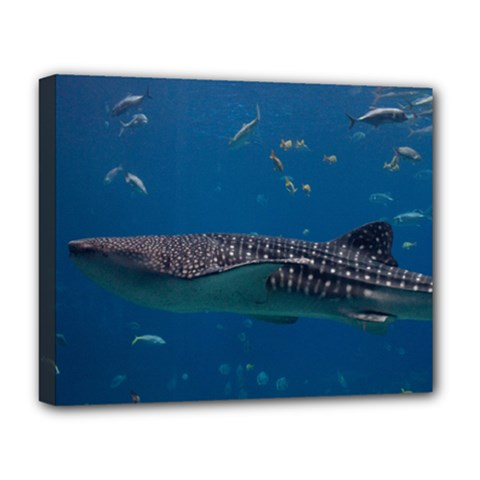 Whale Shark 1 Deluxe Canvas 20  X 16