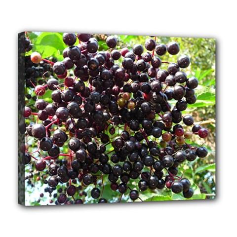 Elderberries Deluxe Canvas 24  X 20