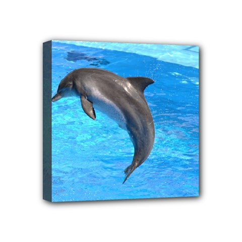 Jumping Dolphin Mini Canvas 4  X 4  (stretched)