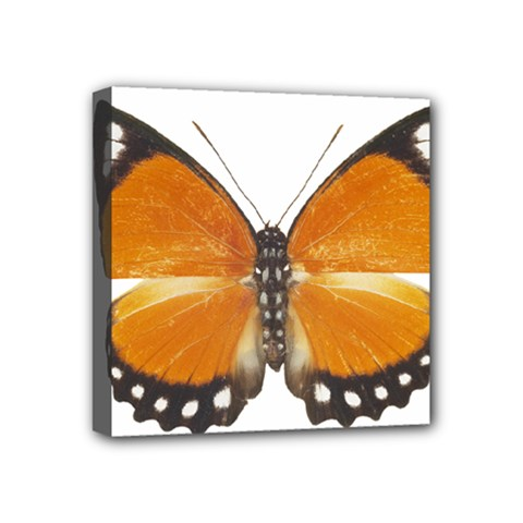 Butterfly Insect 4  X 4  Framed Canvas Print
