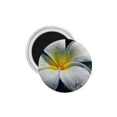 Frangipani tropical flower Small Magnet (Round)