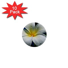 Frangipani tropical flower 10 Pack Mini Button (Round)