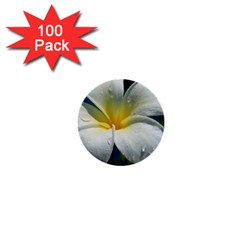 Frangipani Tropical Flower 100 Pack Mini Button (round)
