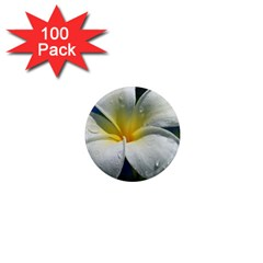Frangipani tropical flower 100 Pack Mini Magnet (Round)