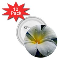 Frangipani tropical flower 10 Pack Small Button (Round)