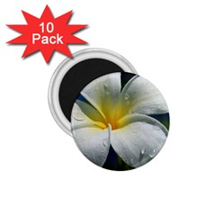 Frangipani Tropical Flower 10 Pack Small Magnet (round)