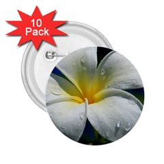 Frangipani Tropical Flower 10 Pack Regular Button (round)