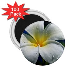 Frangipani tropical flower 100 Pack Regular Magnet (Round)