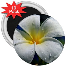 Frangipani Tropical Flower 10 Pack Large Magnet (round)