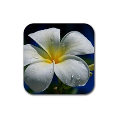 Frangipani tropical flower 4 Pack Rubber Drinks Coaster (Square)