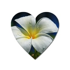 Frangipani Tropical Flower Large Sticker Magnet (heart)