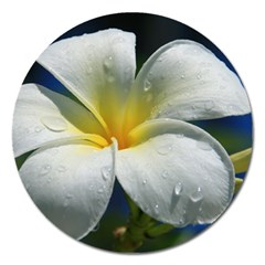 Frangipani tropical flower Extra Large Sticker Magnet (Round)