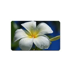 Frangipani tropical flower Name Card Sticker Magnet