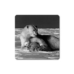 Vintage USA Alaska mother polar bear 1970 Large Sticker Magnet (Square)