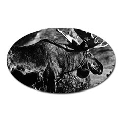 Vintage USA Alaska bull moose 1970 Large Sticker Magnet (Oval)