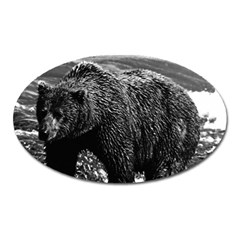 Vintage Usa Alaska Brown Bear 1970 Large Sticker Magnet (oval)