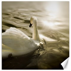 swan 12  x 12  Unframed Canvas Print