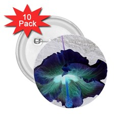 Exotic Hybiscus   10 Pack Regular Button (round)