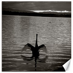 swan, Canberra 12  x 12  Unframed Canvas Print
