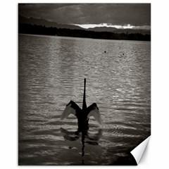 swan, Canberra 16  x 20  Unframed Canvas Print