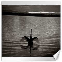 swan, Canberra 20  x 20  Unframed Canvas Print