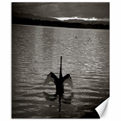 Swan, Canberra 8  X 10  Unframed Canvas Print