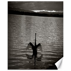 swan, Canberra 11  x 14  Unframed Canvas Print