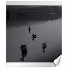 ducks 20  x 24  Unframed Canvas Print