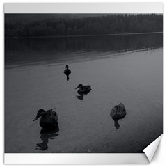 Ducks 20  X 20  Unframed Canvas Print