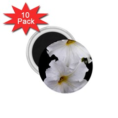 White Peonies   10 Pack Small Magnet (Round)